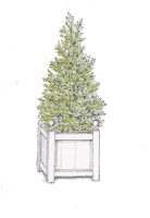 BayTree-in-wooden-Planter