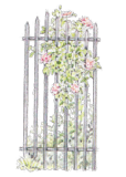 Garden-Fence-and-Clematis