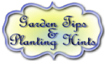 Garden-tips-and-planting-hints