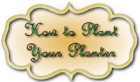 How-to-plant-up-your-planter