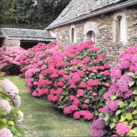 Garden Design Garden Design With Cottage Garden Plants For Shade - Cottage garden plants
