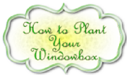 how-to-plant-your-window-box