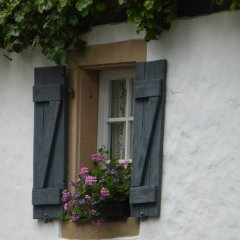 window box plants